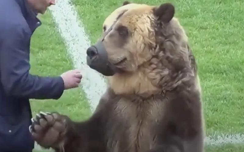 animal bear match twitter