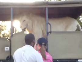 unilad lion truck