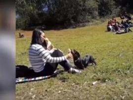 Dog owner eats ice cream youtube