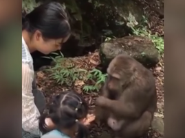 Monkey punches girl