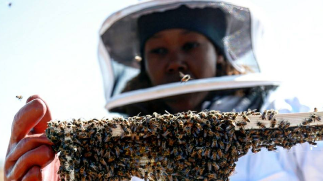 facebook bees lady native