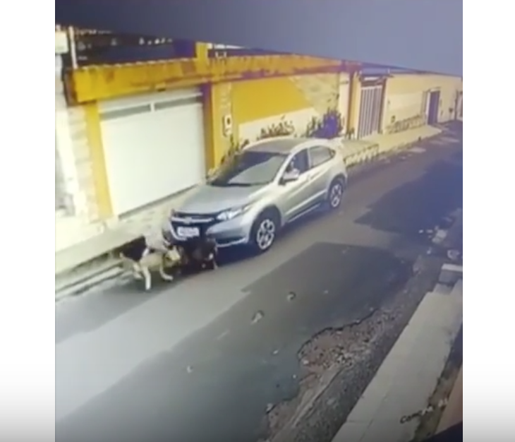 Lady drives over dogs