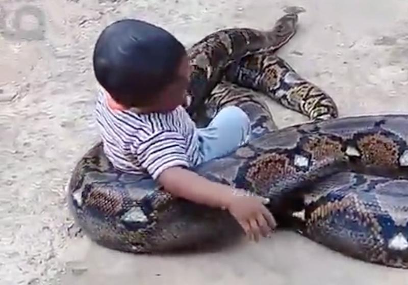 python unilad pic
