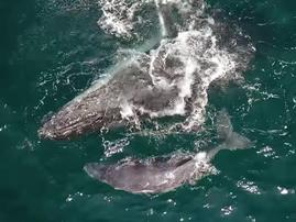 whales umdloti pic youtube
