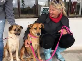 Abused dogs find new home