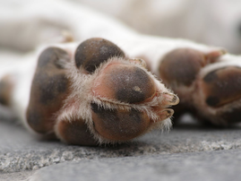 paws picture pexels