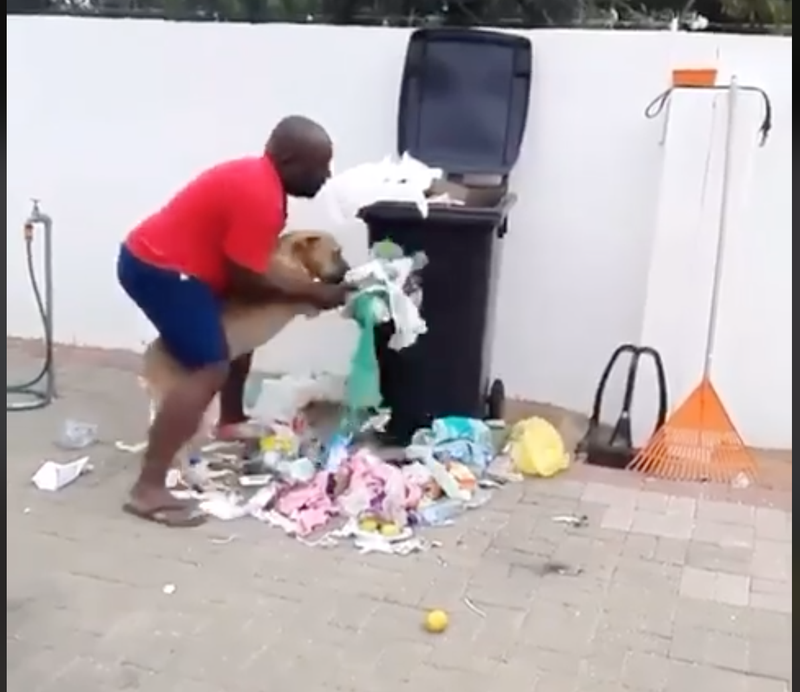 Dog picking up litter
