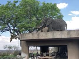 elephant on roof