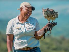 owls bad luck beautiful news