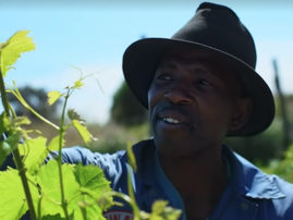 Uprooting expectations and planting a vision for Gugulethu