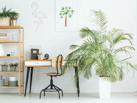 Workspace with plants / iStock