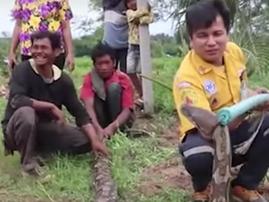 Massive python found on farmer's field / YouTube