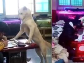 Dog watches over girl / YouTube