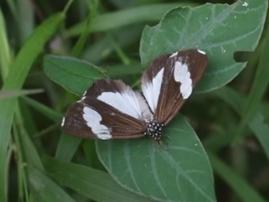 Beautifl news butterflies