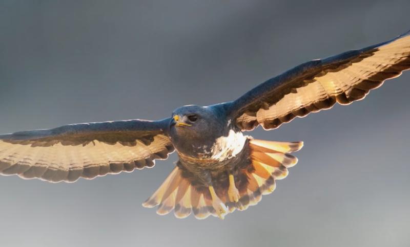 Birds flying beauriful news