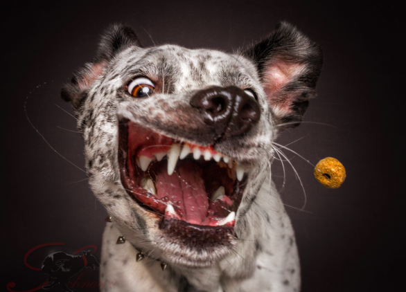 WATCH: Photographer takes photos of dogs trying to catch treats