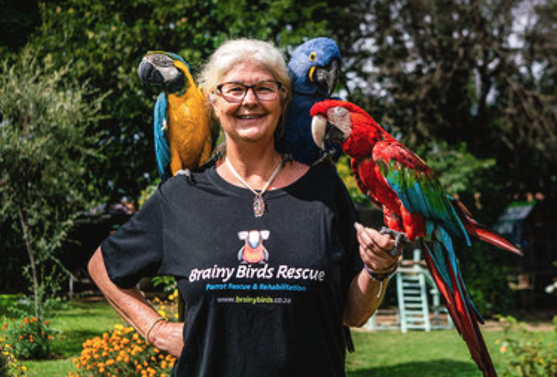 Bird rescue / Beautiful News