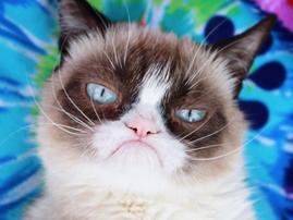 Grumpy cat / Instagram