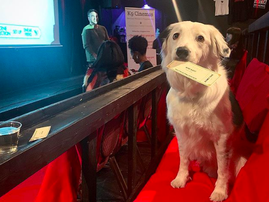 Movie theater allows owners and their dogs to watch a movie together