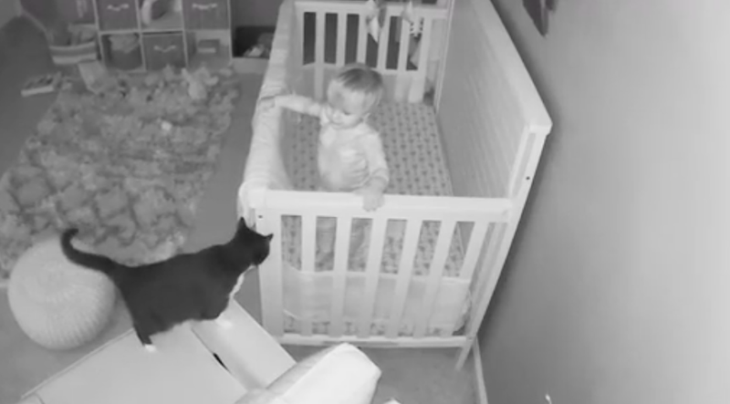 Cat having conversation with baby
