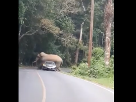 Elephant crushes car