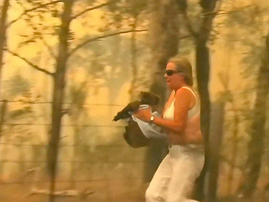 Woman saver koala bear