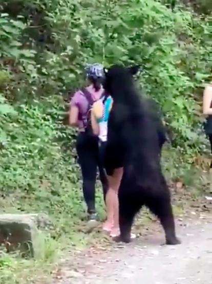 bear in Mexico
