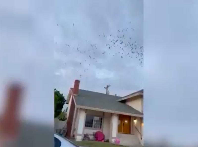 Birds Fly Into House
