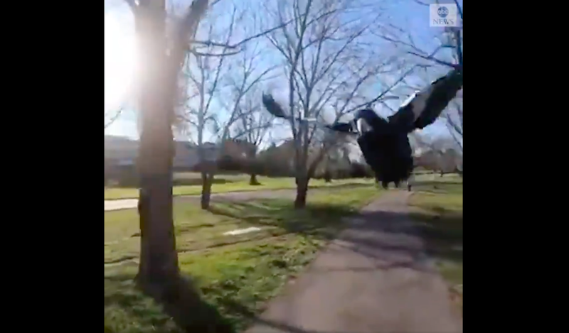 WATCH: Bicyclist experiences vicious real-life angry bird attack