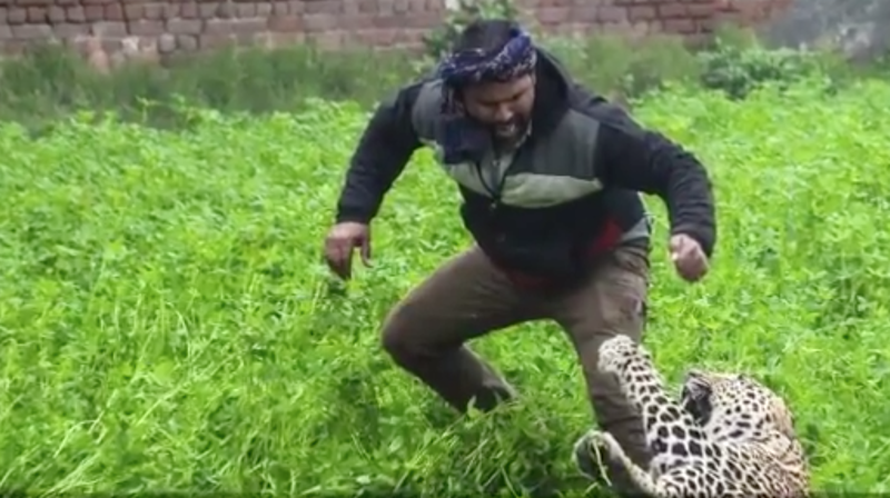 A leopard in the Indian city of Jalandhar