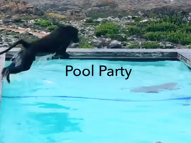 BABOON pool party