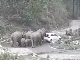 Road-raging elephants charge car off road at national park