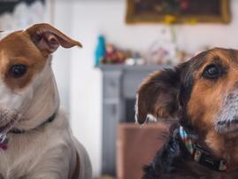 dogs beautiful news pic