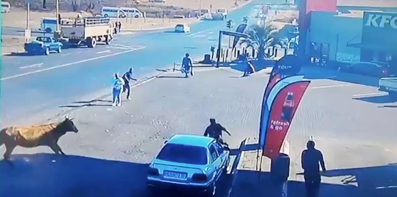 ANGRY BULL KNOCKS OVER WOMAN