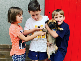 Jane's kids / Lula, Rocco, and Cooper / Supplied