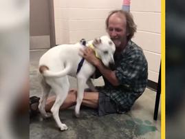 Homeless man reunites with dog / New York Dog