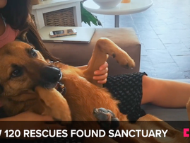 Beautiful News rescues