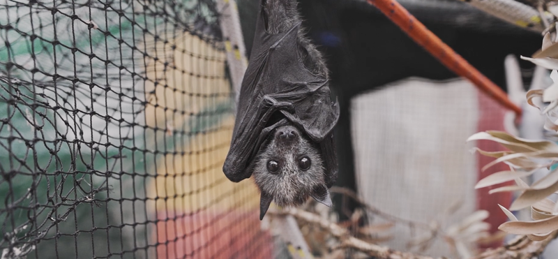 Beautiful News - Bats