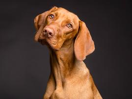 Pet dog 14 December