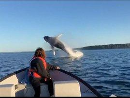 Whales gymnastics