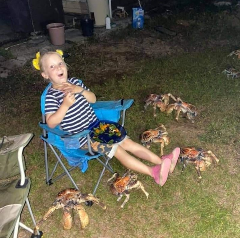 About 50 giant crabs invade family's dinner