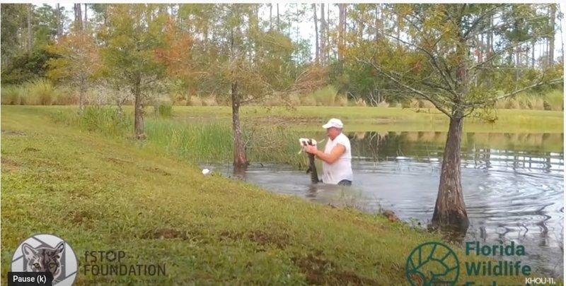 Man wrestles alligator