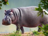 Hippo Dullstroom