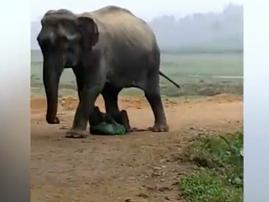 Man survives elephant attack