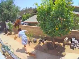 Woman fighting bear