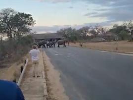 WATCH: Elephants scare off Kruger National Park visitors