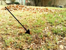 Puff Adder camouflage in garden leaves scares homeowner