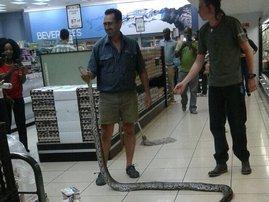 Snake fridge Spar