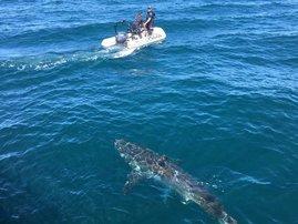 shark x australian police
