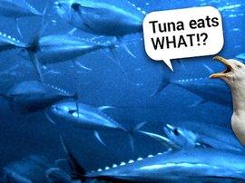 seagull and tuna